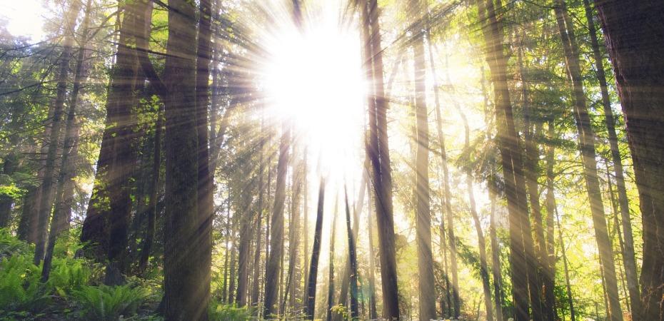 Aloita aamusi rauhasta hengitys kuljettaa sinut kiireesta rauhaan