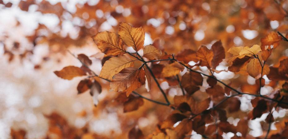 Lokakuun energia paluu itseen paluu juurille